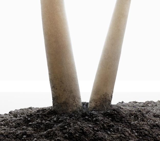 Perspex Box Mushroom Close up