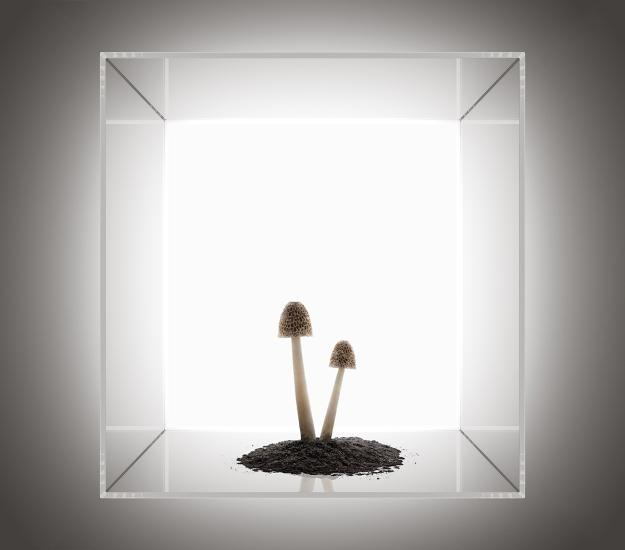 Perspex Box Mushroom